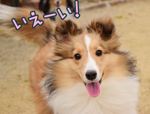 kunugi_20150404135014625.jpg