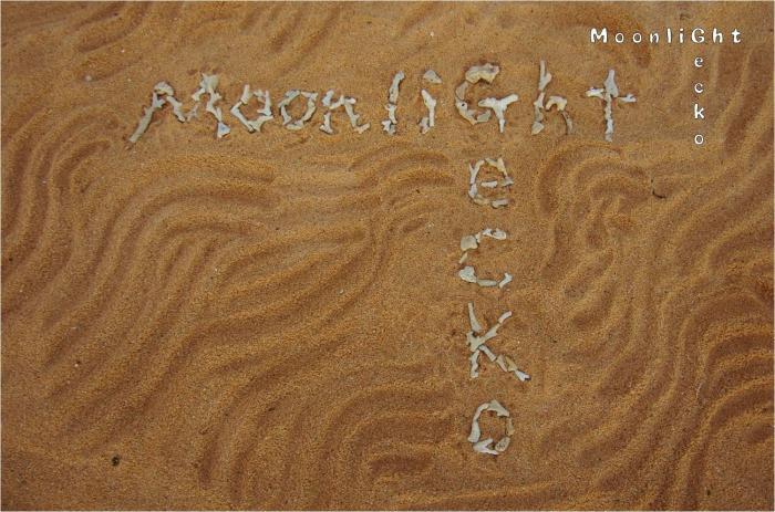 MoonlightGecko