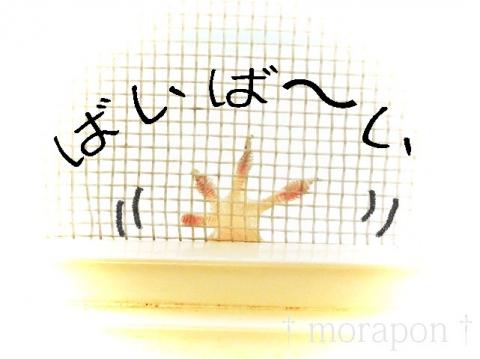 150711 ヤモリのヤモさん-2