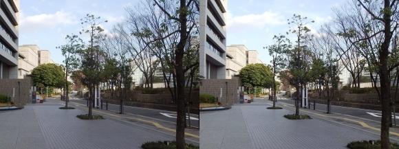 中之島緑道(平行法)