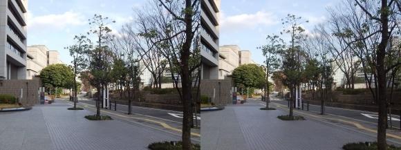 中之島緑道(交差法)