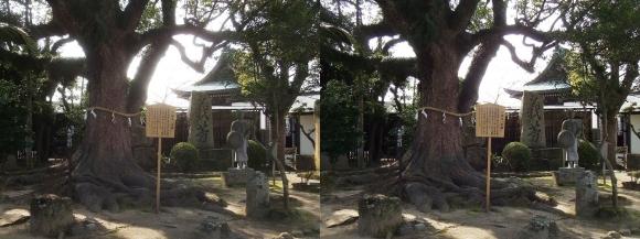 赤穂大石神社 大石内蔵助邸址庭園②(平行法)