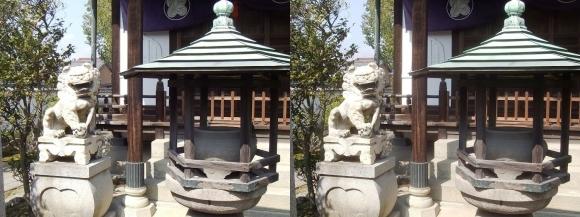 花岳寺 浅野家霊廟の狛犬(交差法)