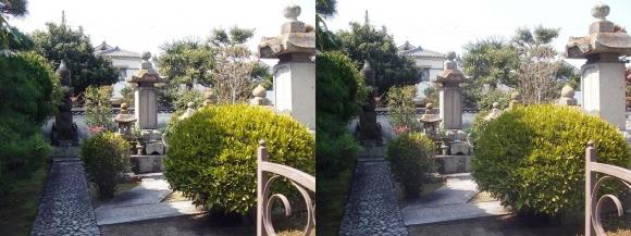 花岳寺 森家の墓(交差法)