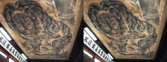 花岳寺 本堂 天井の大額「竹に虎」(平行法)