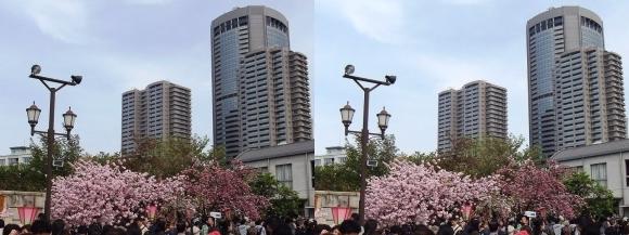 造幣局 桜の通り抜け㉗(平行法)