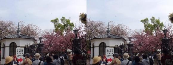 造幣局 桜の通り抜け㉕(平行法)