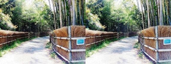 竹の径⑨(平行法)