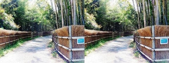 竹の径⑨(交差法)