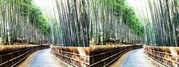 竹の径⑧(平行法)