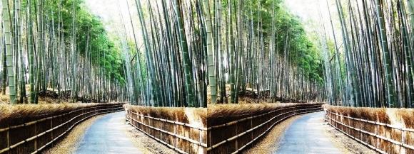 竹の径⑧(交差法)