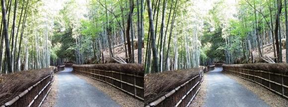竹の径⑦(平行法)