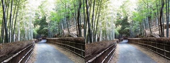 竹の径⑦(交差法)