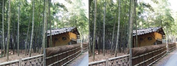 竹の径⑥(交差法)