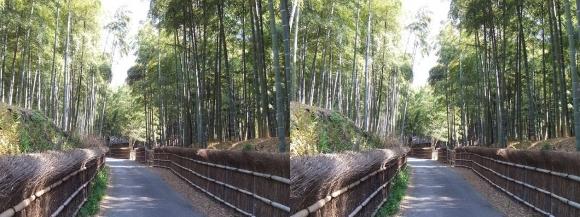 竹の径⑤(平行法)