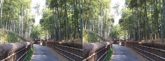 竹の径⑤(交差法)