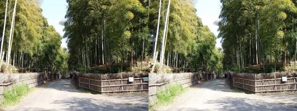 竹の径④(平行法)