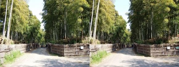 竹の径④(交差法)