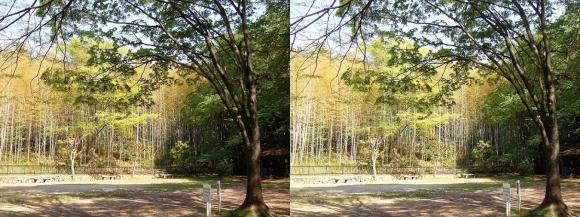 京都市洛西竹林公園 こどもの広場①(平行法)