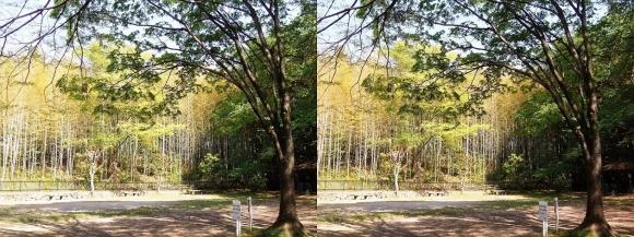京都市洛西竹林公園 こどもの広場①(交差法)