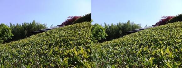竹の資料館 回廊式庭園⑤(平行法)