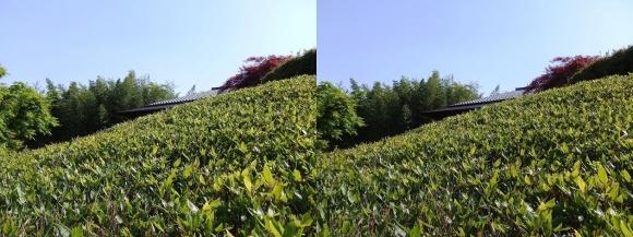 竹の資料館 回廊式庭園⑤(交差法)