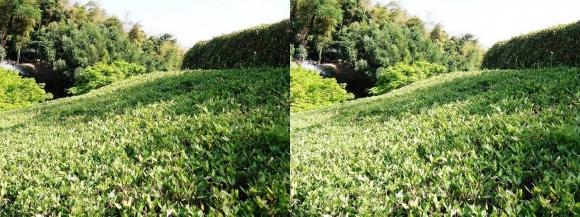 竹の資料館 回廊式庭園④(平行法)