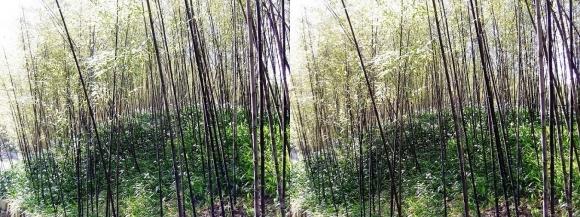 竹の資料館 生態園遊歩道③(交差法)