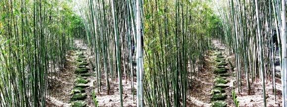 竹の資料館 生態園遊歩道②(交差法)