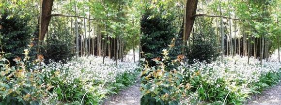 竹の資料館 生態園遊歩道①(平行法)