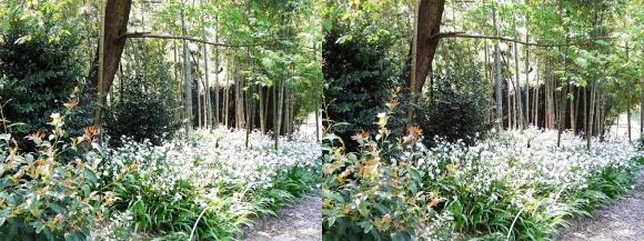 竹の資料館 生態園遊歩道①(交差法)