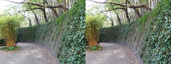 京都市洛西竹林公園②(交差法)