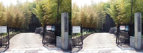 京都市洛西竹林公園①(平行法)
