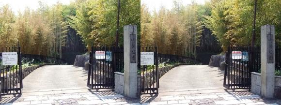 京都市洛西竹林公園①(交差法)