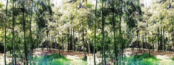 竹の径③(平行法)