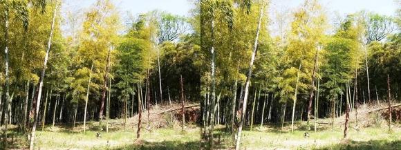 竹の径②(平行法)