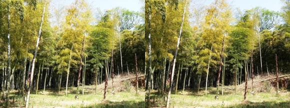 竹の径②(交差法)