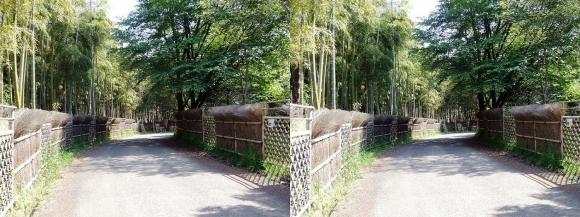 竹の径①(平行法)