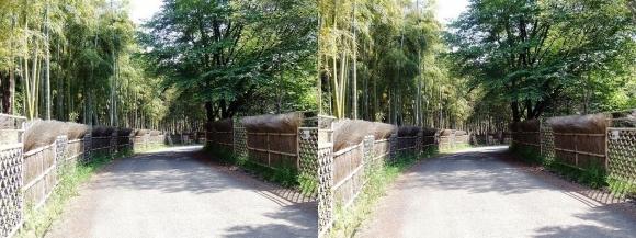 竹の径①(交差法)