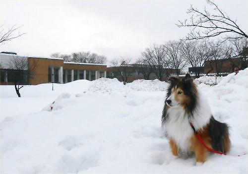 01a 500 20141221 朝 雪の桜並木 Erie