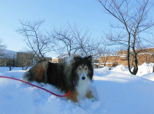 03 500 20141228 SnowFine MtMyoko Erie ZU