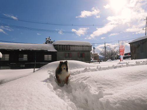 04 500 20150102 昼LL菜園Dog-run Erie01