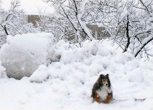 03 500 20150102 桜並木降雪中Erie01