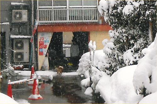 02 500 20150101 朝の降雪03 LL菜園横R Erie01