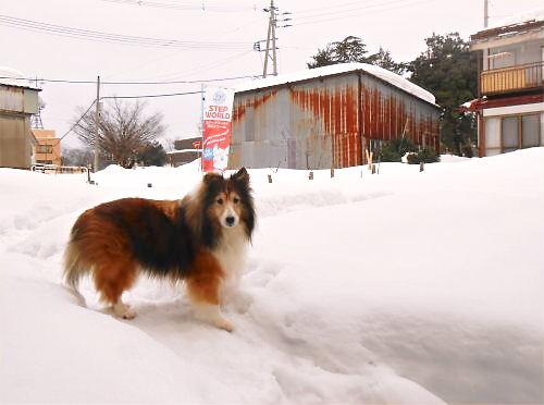 01 500 20150110 Snowed LL-garden with Erie
