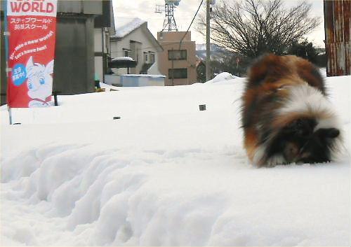 02 500 20150114 昼:凍み渡りon Dogrun Erie01