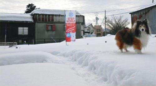 03 500 20150114 昼:凍み渡りon Dogrun Erie