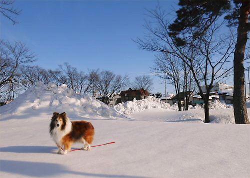05 500 20150114 朝凍み渡り05 Erie 赤松、市駐車場南
