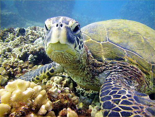 06 500 20080629 Turtle face
