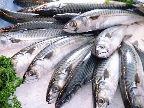 05c500 鯖さば:mackerel